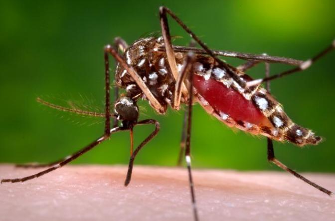 Epidemia de Chikungunya en el Caribe: Nuevas oportunidades y viejos desafíos