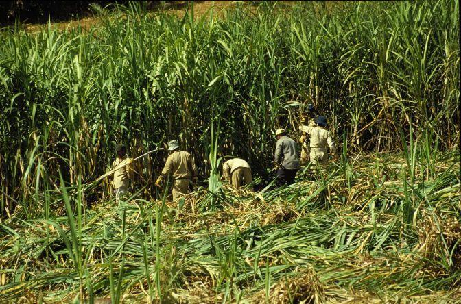 Enfermedad renal crónica de origen no-tradicional: un misterio epidemiológico desde los terrenos de Centroamérica